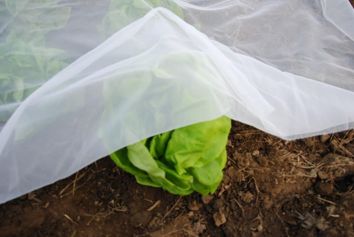 Couverture de protection pour le potager