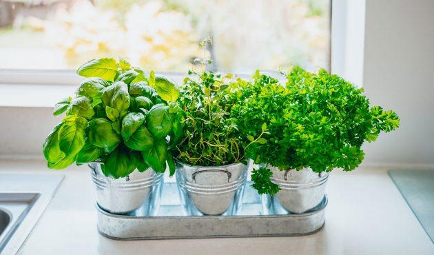Astuces pour faire pousser vos fines herbes à la maison