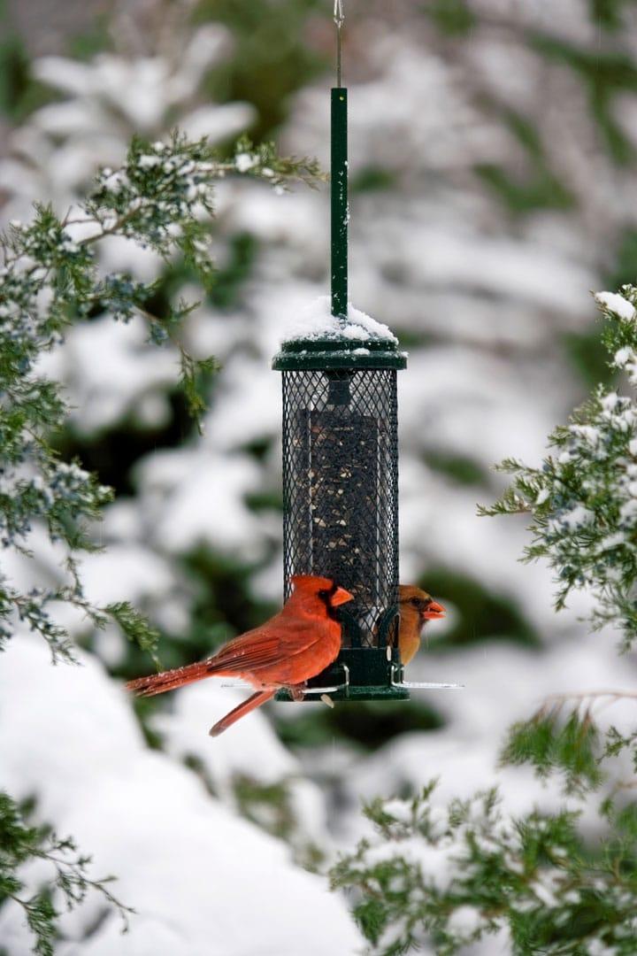 Mangeoire pour nourrir les oiseaux en hiver