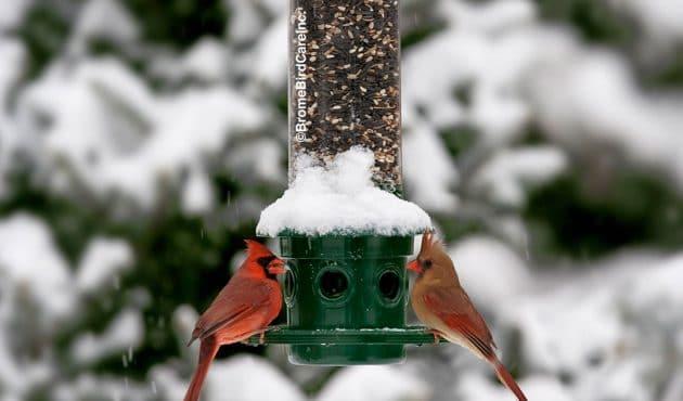 Rendre sa cour accueillante pour nourrir les oiseaux en hiver