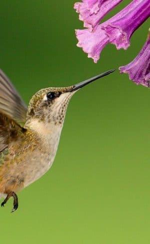 Quiz express : Êtes-vous prêt à accueillir les oiseaux migrateurs?