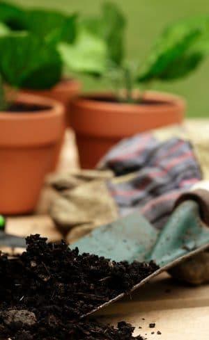 Outils de jardinage indispensables pour le potager