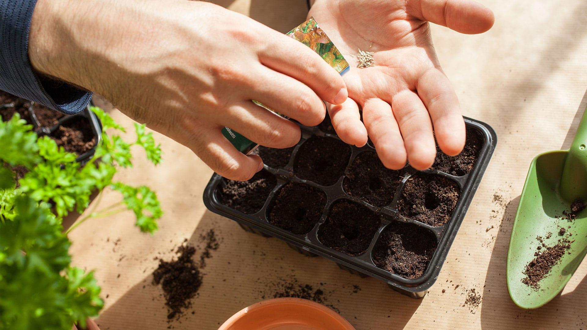 Pénurie de semences