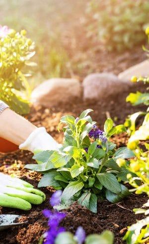 Quoi faire au jardin en mai?