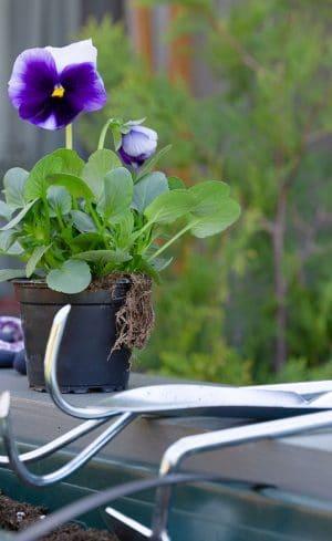 Meilleurs outils de jardinage pour le désherbage