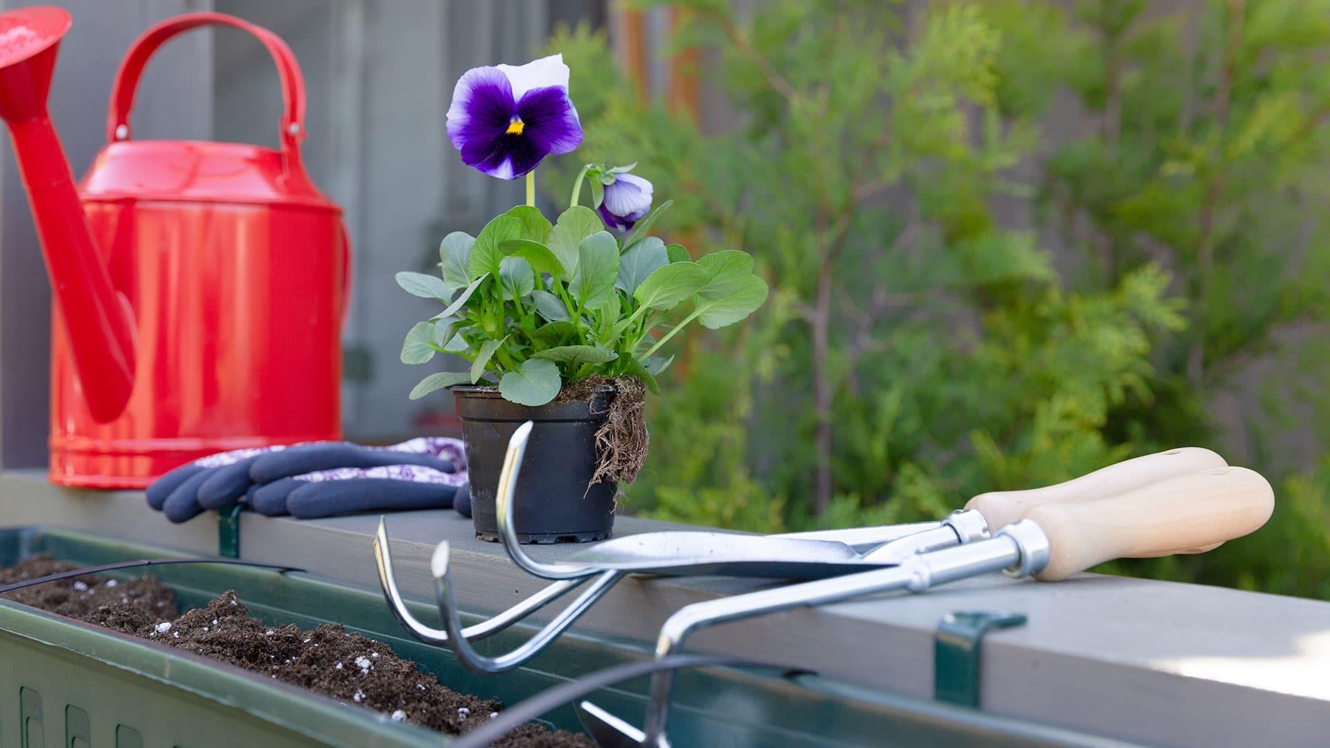 Outils de jardinage pour le désherbage