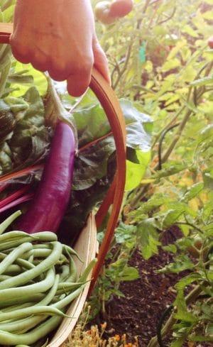 Guide des légumes à ressemer l'été