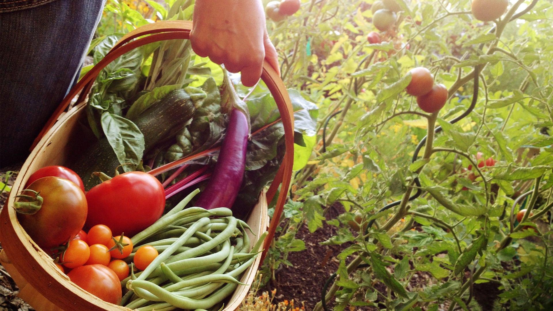Legumes a ressemer