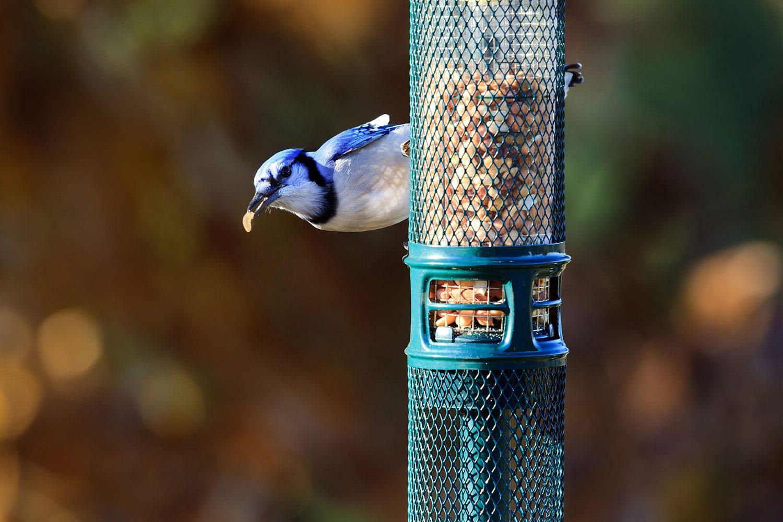 Inviter des oiseaux nicheurs au jardin