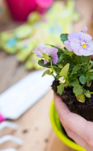 Quoi faire au jardin en juin?
