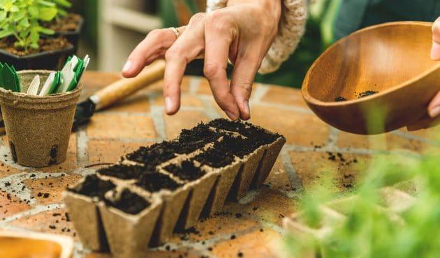 Pourquoi récolter ses semences au jardin
