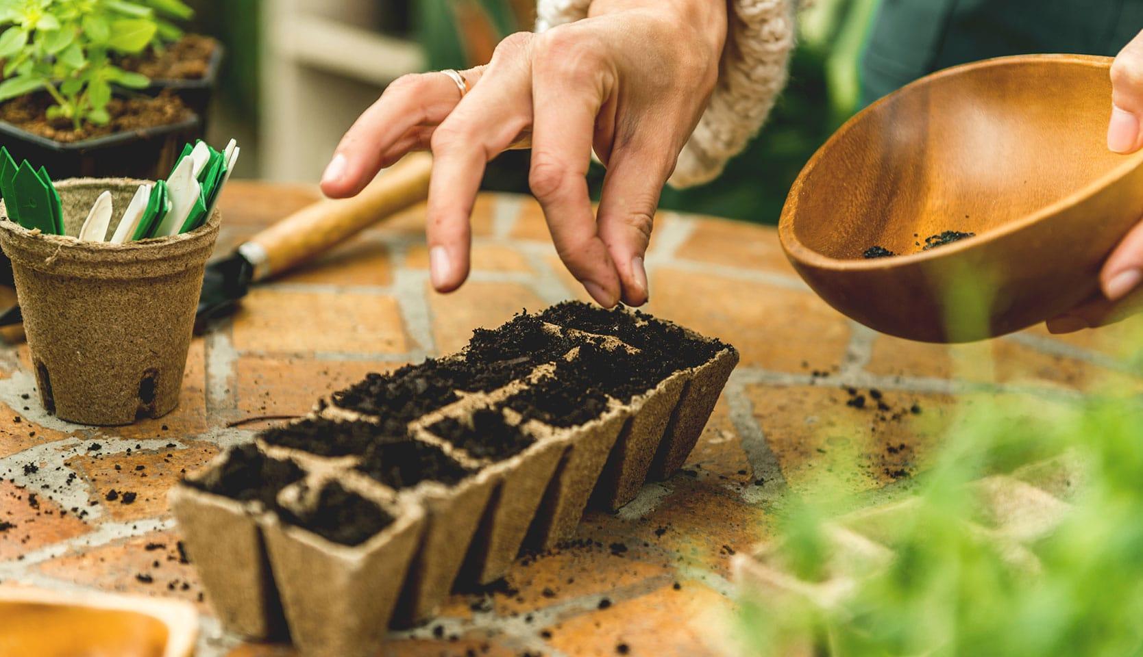 Recolter ses semences