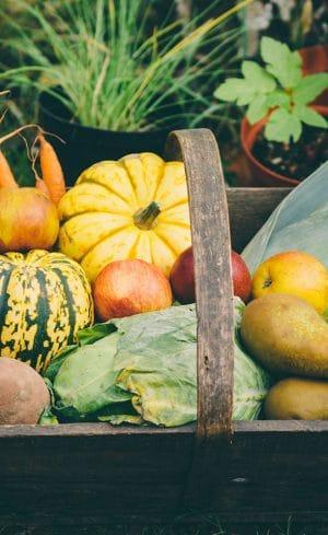 Quoi récolter l'automne au potager