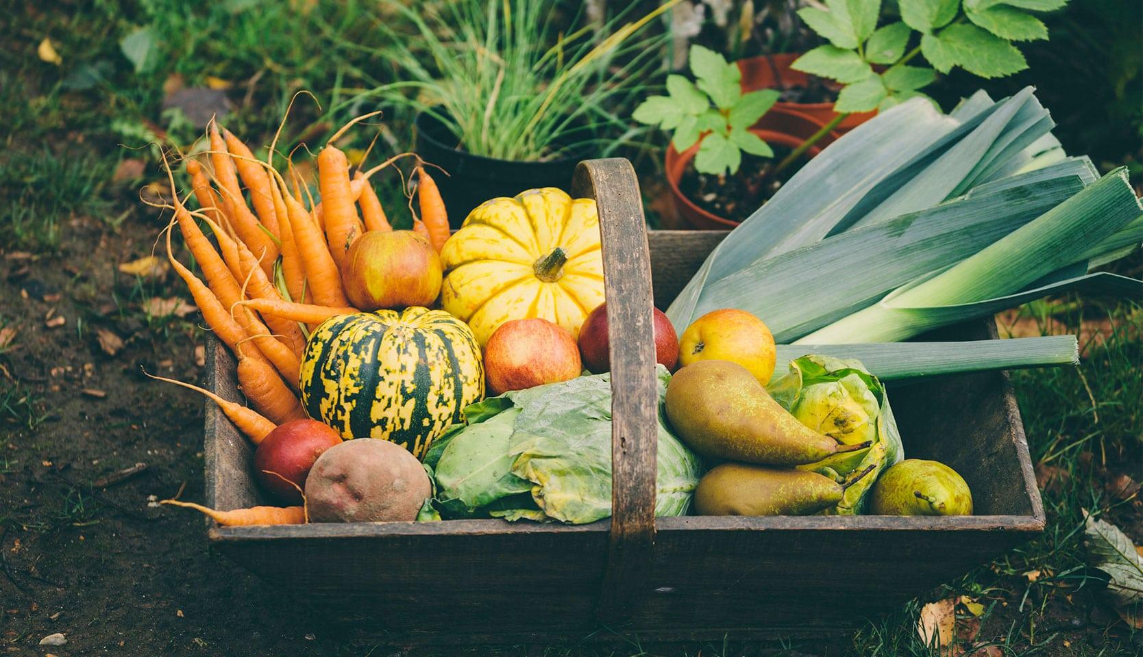 Récoltes d'automne au potager