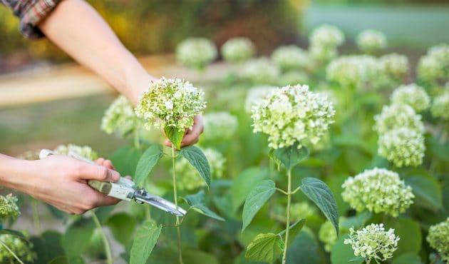 Quand et comment tailler les arbustes à l'automne