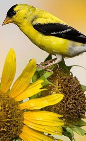 Travaux d'automne dans un jardin d'oiseaux