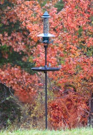 Mangeoire pour oiseaux l'automne